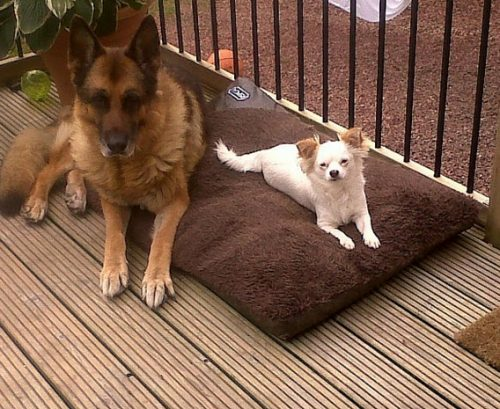 Cameron & Greig Veterinary Surgeons  Photo Gallery   Poppy stealing Austin's bed